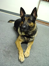 Ranger-Partner of Deputy Shawn Rosner