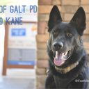 K9 Kane | New Protective Gear, Safer Days