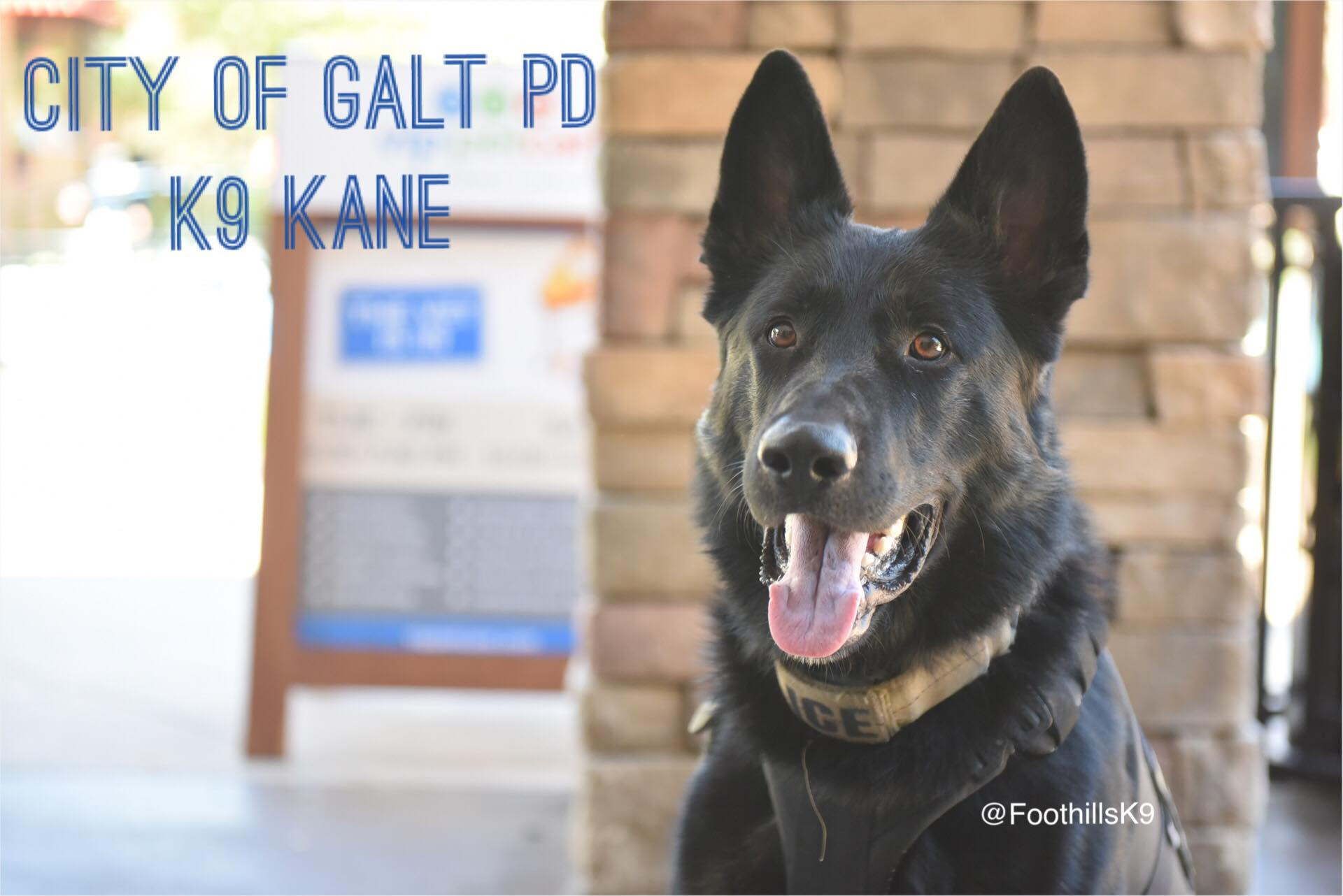 K9 Kane | New Protective Gear, Safer Days